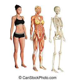 Female illustration of skin, muscle and skeletal systems isolated on a white background. Male version also available.