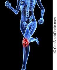 3d rendered illustration of a running female skeleton with highlighted knee joint