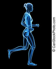 Female jogger - Jogging woman with visible skeleton