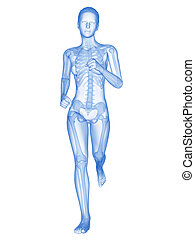 Female jogger with visible bones - medical 3d illustration -...