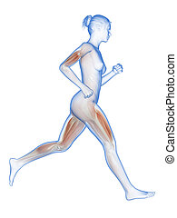 Female jogger with visible muscles - medical 3d illustration...