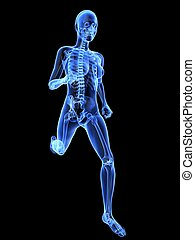 female jogger - x-ray - 3d rendered x-ray illustration of a ...