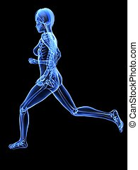 female jogger - x-ray - 3d rendered x-ray illustration of a...