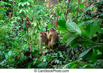female macaques - and babies playing