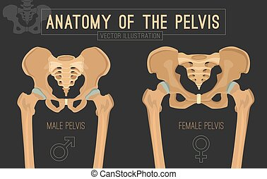 Female Male Pelvis - Male vs female pelvis. Main differences...
