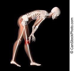 Female medical skeleton with knee pain