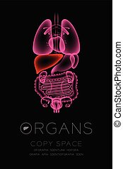Female Organs X-ray set, Liver infection concept idea red color illustration isolated glow in the dark background, with Organ text icon and copy space