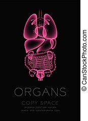 Female Organs X-ray set, Normal concept idea illustration isolated glow in the dark background, with Organ text and copy space
