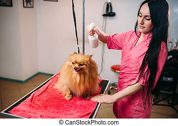Female pet groomer, dog in grooming salon