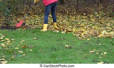 female rake dry autumnal leaves with rake in own garden. 4K