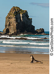 female sea lion resting on beach
