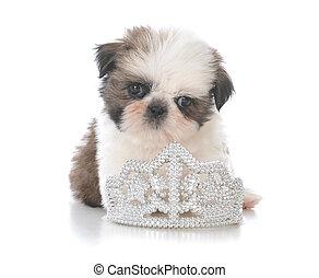 female shih tzu puppy laying  inside tiara