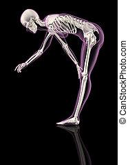 Female skeleton bending over - 3D render of a female ...