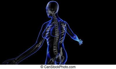 Female skeleton - Transition body - female skeleton - body....