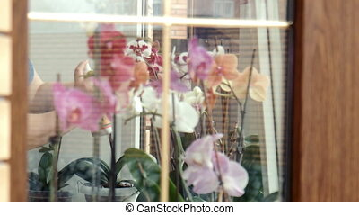 Female sprays fertilize orchids at a window
