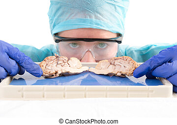 Female student with a dissected cow brain