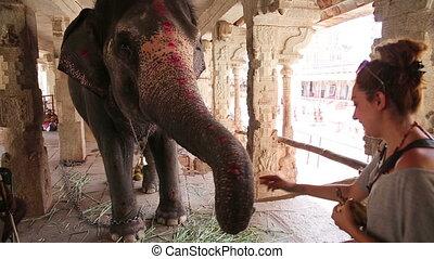 Female tourist feeding elephant