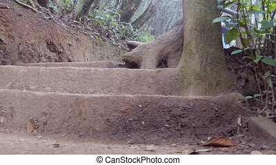 Female tourist with backpack going down on stony stairs in tropical park. Young woman walking down stairway. Girl stepping at forest trail during travel vacation. Low angle of view Close up