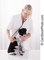 Female Vet Examining Dog In Hospital