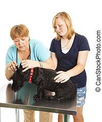 Female Vet Examining Patient