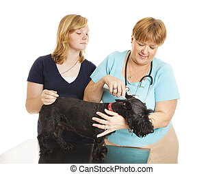 Female Vet Treats Patient