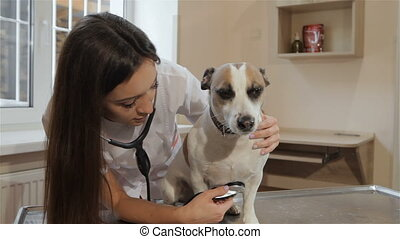 Female vet uses stethoscope to check up the dog