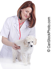 Female vet with poodle puppy