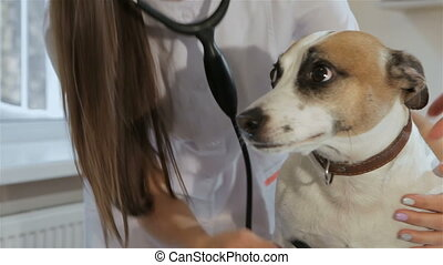 Female veterinarian checks up the dog's breath