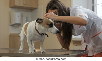 Female veterinarian using medical tool to check up the dog's ears. Pretty woman in white coat looking into the dog's ear. Young female vet doctor checking up dog's left ear