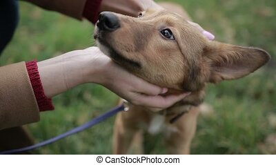Females hands stroking cute puppy outdoors - Closeup young...