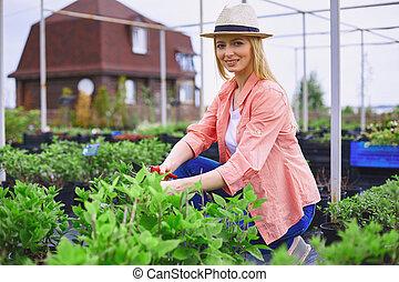 femininas, agricultor