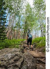 femininas, hiker, ligado, a, filhote, lago, rastro, em, rochoso, muntain, nacional, par