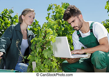 femininas, jovem, agricultor, vinhedo, macho, segurando, laptop