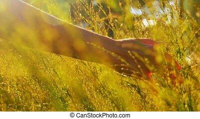 femme, été, herbes, toucher, champ, ensoleillé, main