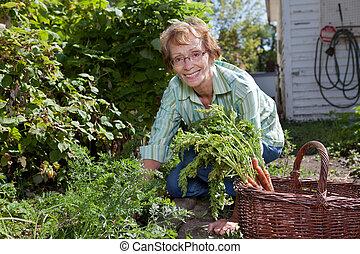 femme aînée, carottes, récolte