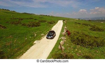 femme, cabriolet, conduite, terre, jeune, route