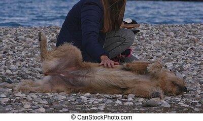 femme, caresser, pose, chien, espiègle, sdf, plage caillou