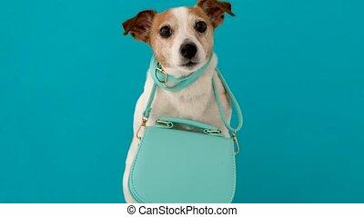 femme, chien, mignon, sac main