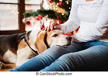 femme, elle, chien, arbre., unrecognizable, personne agee, noël
