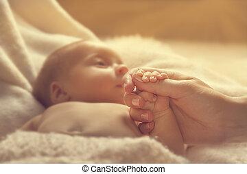 femme, famille, mère, main, parent, foyer, nouveau né, né, sélectif, enfant avoirs, bébé, nouveau, mains, gosse