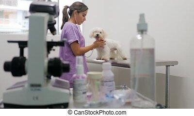 femme, fonctionnement, docteur, chien, clinique, blanc