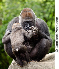 femme, gorille, s'inquiéter, jeune