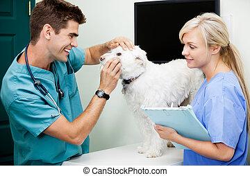 femme, infirmière, à, vétérinaire, docteur, examiner, a, chien