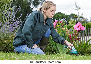 femme, jardinage, printemps, ensoleillé, arrière-cour, jour