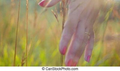 femme, jour, marche, toucher, soleil herbe, été, champ, rayons