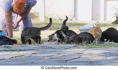 femme, lent, rue., motion., alimentation, sdf, 3840x2160, chats, pain