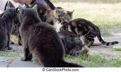 femme, lent, rue., motion., alimentation, sdf, 3840x2160, chats