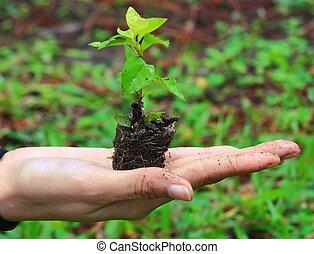 femme, mains, tenue, plante, sur, nature, fond