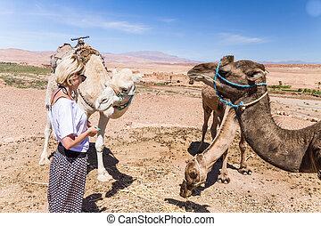 femme, morocco., jeune, chameaux