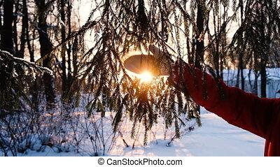 femme, moufle, pelucheux, neige, motion main, battements, lent, secousses, branche, impeccable, long, branche, coucher soleil